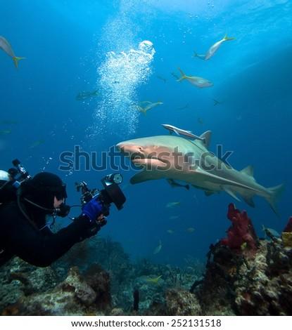 Lemon shark and underwater photographer - stock photo
