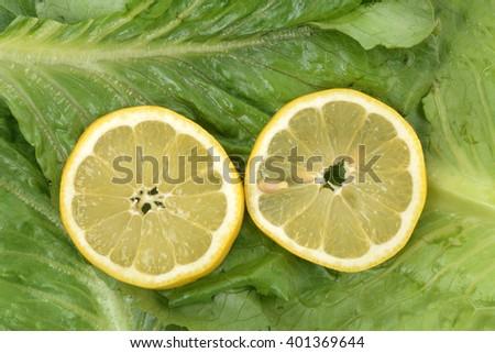 lemon slices on romaine lettuce - stock photo