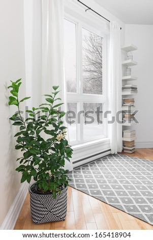 Lemon tree in a room with peaceful winter landscape outside the window. - stock photo