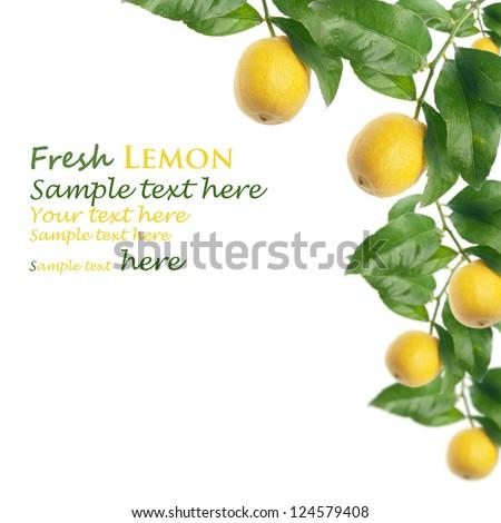 lemon tree with white background - stock photo