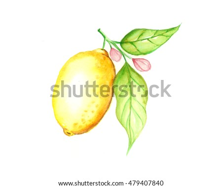 Lemon, Watercolor painting isolated on white background