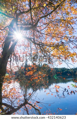 Lens flare through branches and autumn color leaves Mc Laren Falls Park Tauranga New Zealand