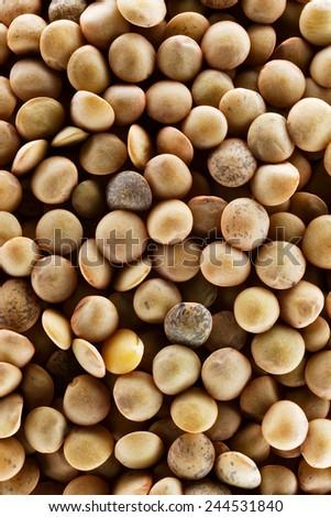 Lentils - macro - stock photo