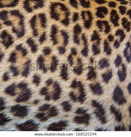 Leopard fur background. - stock photo