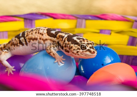 Leopard Gecko Crawling On colorful Easter Eggs - stock photo