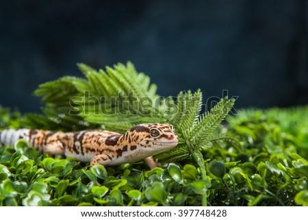Leopard Gecko on foliage - stock photo