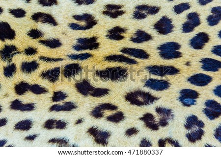 Leopard hair closeup for background user