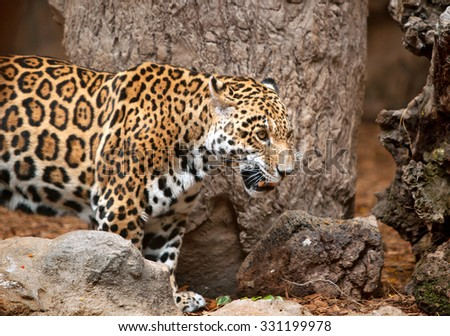 leopard in a zoo  - stock photo