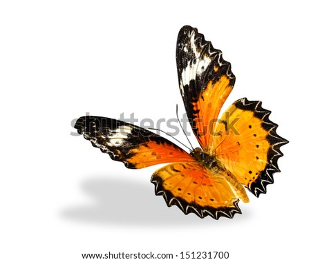 Leopard Lacewing butterfly flying up isolated on white background - stock photo