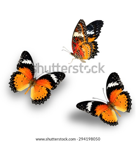 Leopard Lacewing butterfly isolated on white background. - stock photo