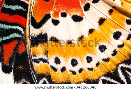 Leopard lacewing butterfly wing texture background - stock photo