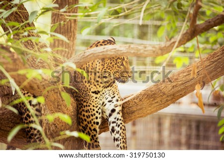 Leopard potrait in a zoo. - stock photo