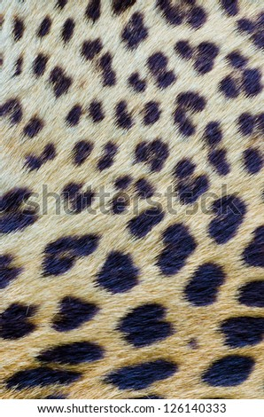 Leopard real hair