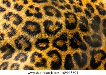 leopard skin texture background - stock photo
