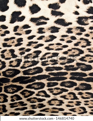 Leopard texture  - stock photo