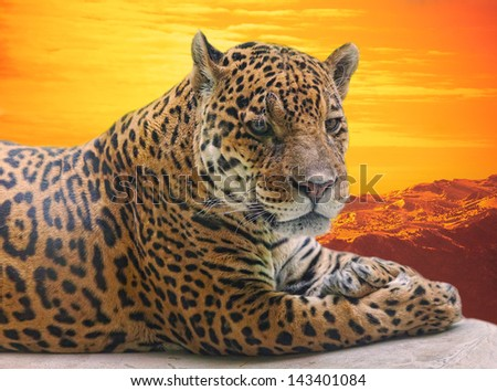 Leopard to lie on a log against a sunset - stock photo