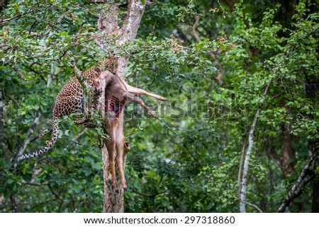 Leopard with a hunt - stock photo