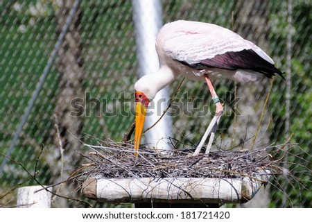 Lesna - stork - stock photo