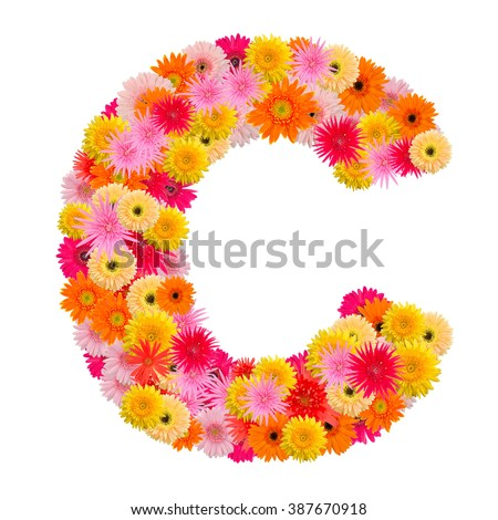 Letter C alphabet with gerbera  isolated on white background   - stock photo