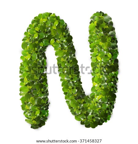 Letter N made of green leaves isolated on white