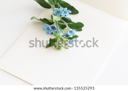 Letter paper with blue flowers
