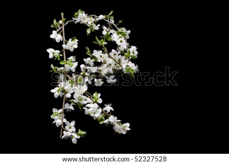 "letter ""R"" from blossom tree on black background - alphabet - stock photo"