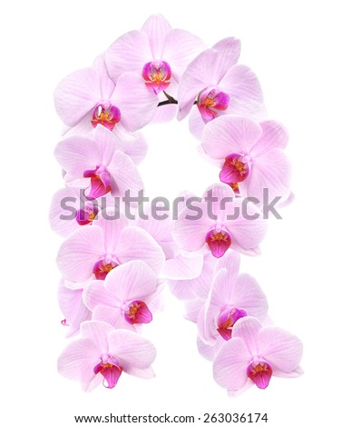 letter R from orchid flowers. isolated on white