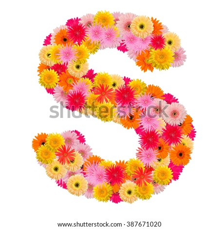 Letter S alphabet with gerbera  isolated on white background   - stock photo