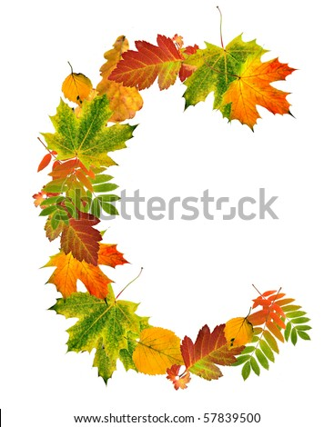 Letter sign C made of autumn colored leaves close up  isolated on white background - stock photo