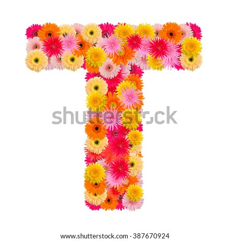Letter T alphabet with gerbera  isolated on white background   - stock photo