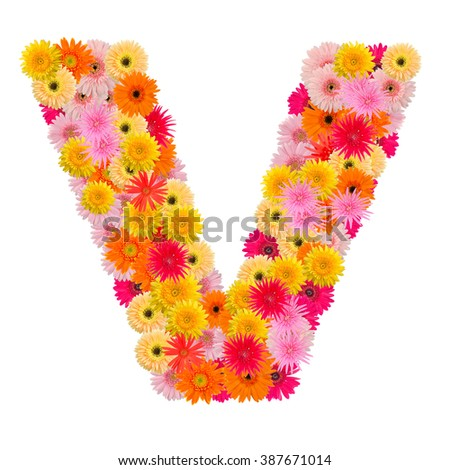 Letter V alphabet with gerbera  isolated on white background   - stock photo