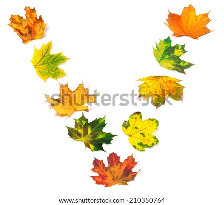 Letter V composed of autumn maple leafs. Isolated on white background.