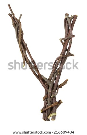 Letter Y. Alphabet from the branches of birch are isolated on a white background. Wooden font. - stock photo