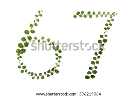 "Letters font number  ""6,7"" from climber leaf, ivy leaf, green leaf on isolated."