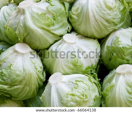 Lettuce background - stock photo