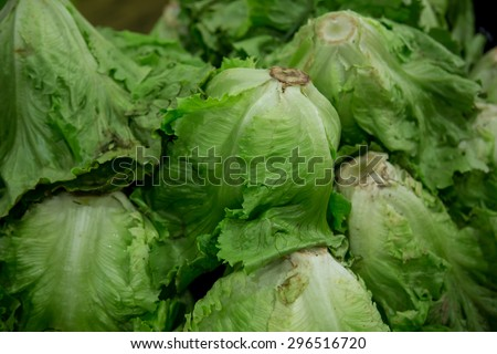 lettuce group from marketplace - stock photo