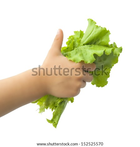 lettuce in the children's hand on a white background