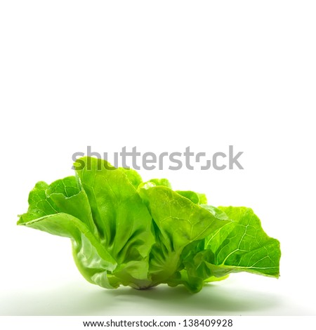 Lettuce isolate - stock photo