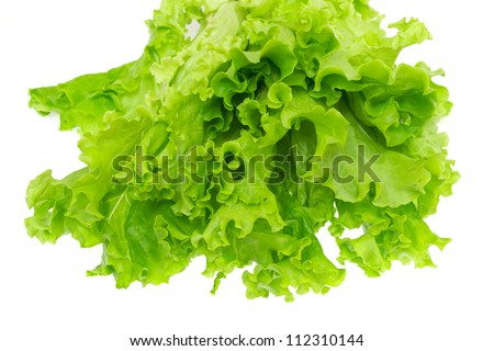 Lettuce isolated on the white background.