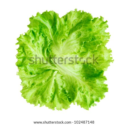 Lettuce isolated on white background - stock photo