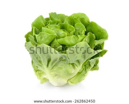 Lettuce isolated on white background. - stock photo