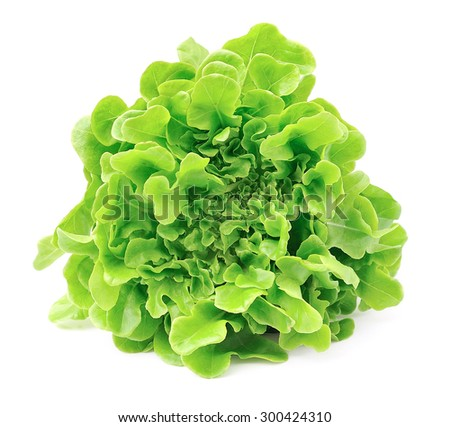Lettuce isolated on white background .Salad leafs  - stock photo