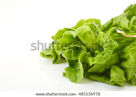 lettuce isolated on white background with shadow