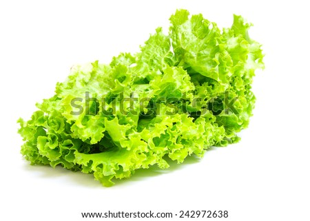 lettuce (Lactuca sativa L.) isolated on white background - stock photo