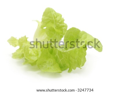 Lettuce leaf, isolated on white.  This is a curly butter lettuce leaf.