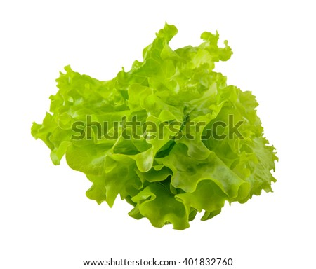 lettuce leaf on a white background