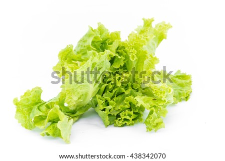 Lettuce salad leaf close up on white background & space for your copy text.  (green salad leaf isolated on white)   - stock photo