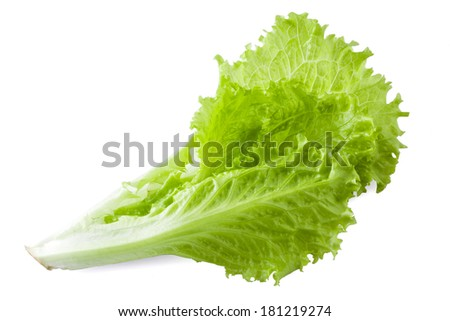Lettuce. Salad leaves isolated on white background - stock photo
