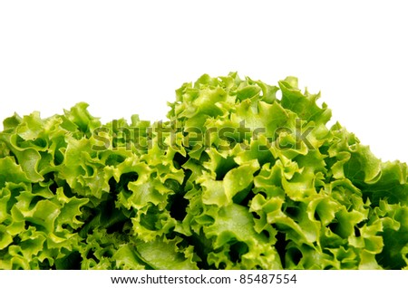 Lettuce salad leaves on a white background.