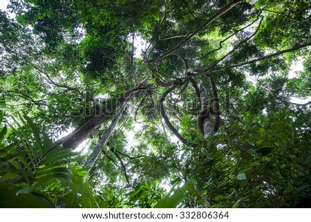 Lianas dangling and sunlight from the rainforest canopy in phuket thailand & Rainforest Canopy Stock Images Royalty-Free Images u0026 Vectors ...